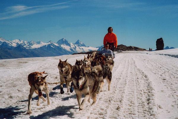 chiens de traîneaux / husky-dogs rides